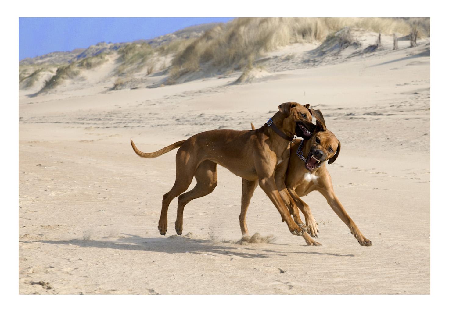 Junge Hunde am Meer