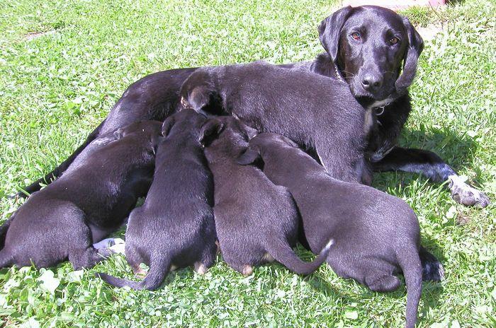 Junge Hunde beim Mittagessen