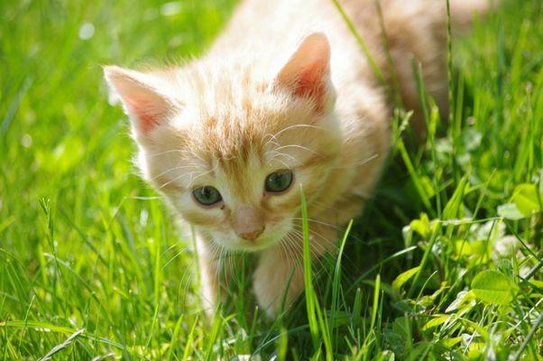 Junge Katze auf Erkundungstour