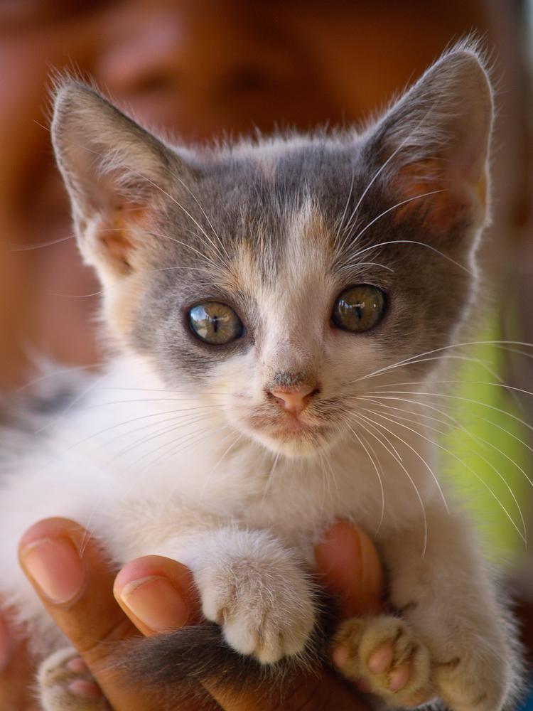 Junge Katze