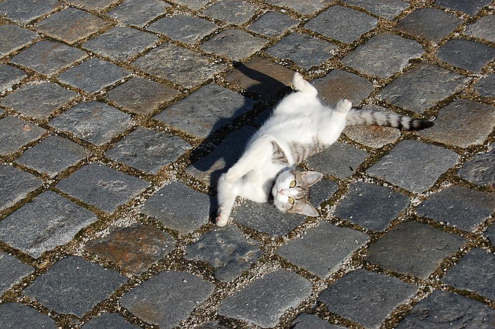 Junge Katze voll in ihrem Spieltrieb erwischt :)