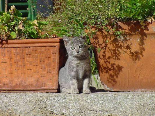 Junge Katze zwischen Terracotta