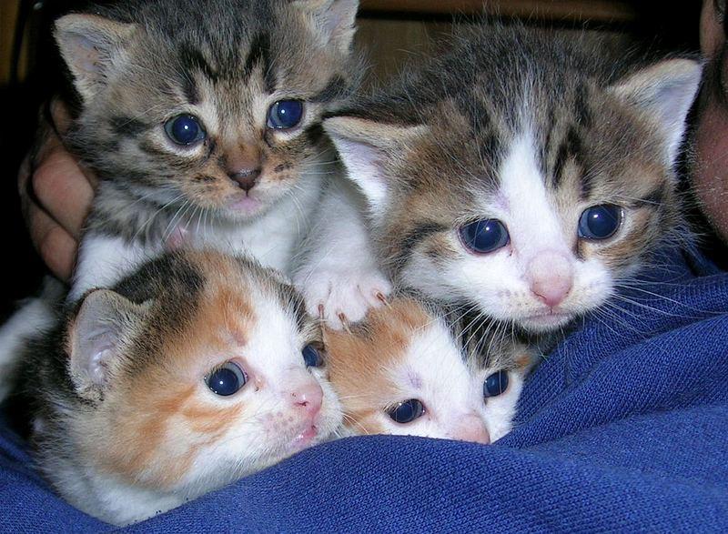 Junge katzen 4 beinig foto bild tiere haustiere for Bilder fa r kinderzimmer junge