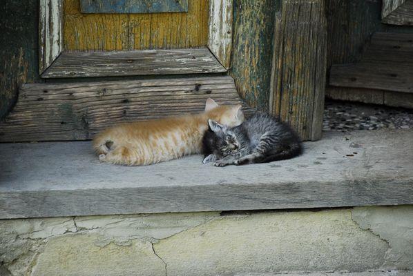 Junge Katzen vor altem Bauernhaus