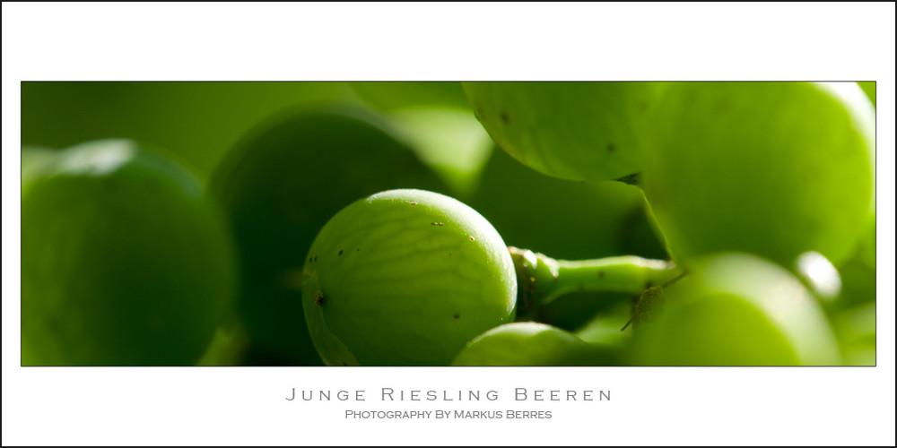 Junge Riesling Beeren