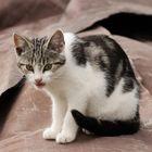 Junge verwilderte Hauskatze - gefunden an einsamer Bucht im Stettiner Haff