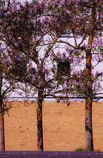 Junge zarte  Bäume im Scharnhauser Park