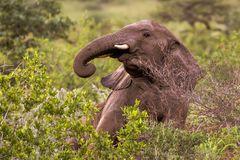junger Elefant - Namibia