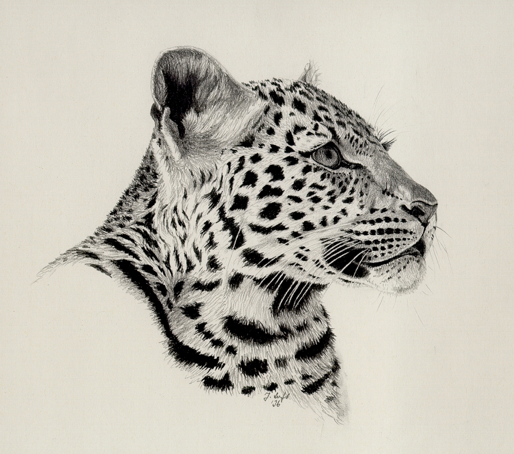 junger leopard foto bild kunstfotografie kultur gem lde skulpturen gem lde und. Black Bedroom Furniture Sets. Home Design Ideas