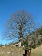 junger Mann, alter Baum