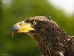 Tierpark-Vögel