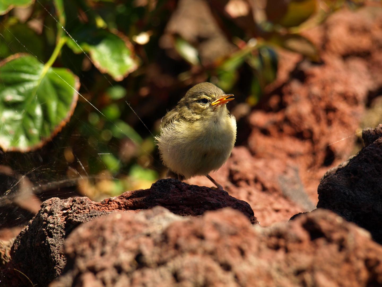 Junger Vogel