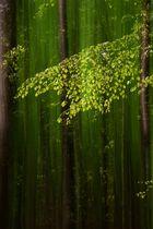 Junges Grün