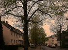 Junges Grün der Bäume in meiner Straße in Ratingen.
