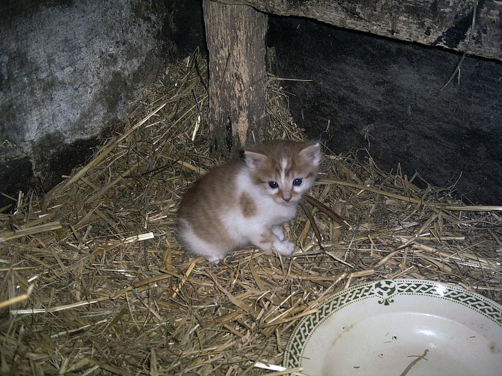 Junges Katzenbaby