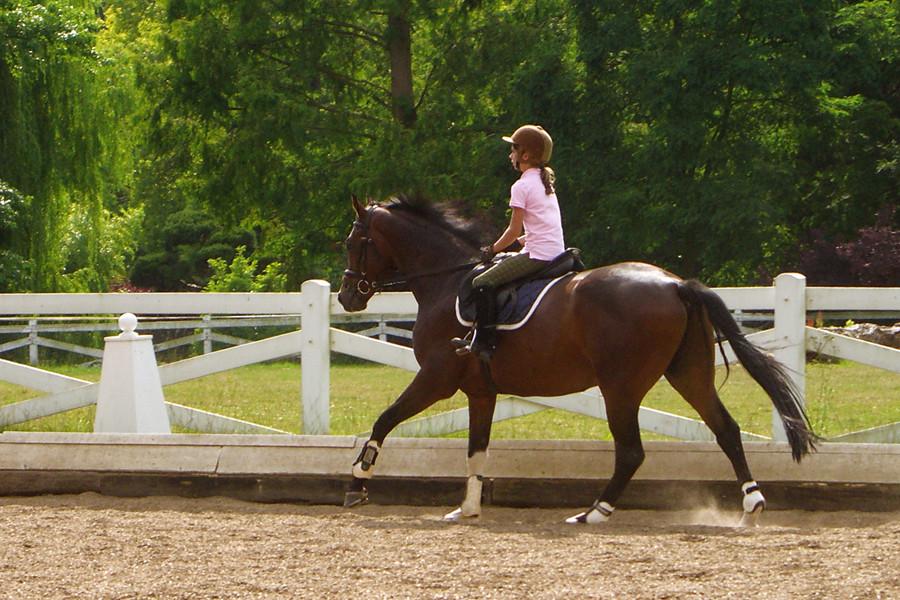 junges Pferd - junge Reiterin
