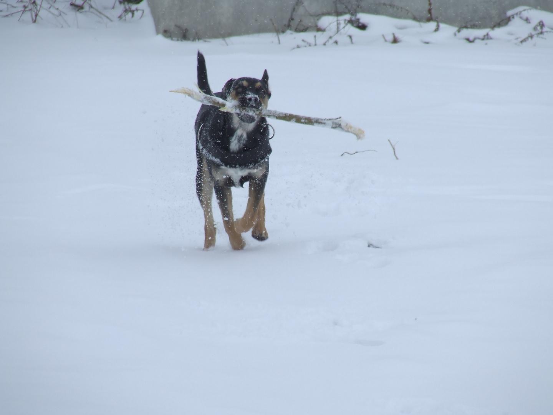 Junghund im Schnee