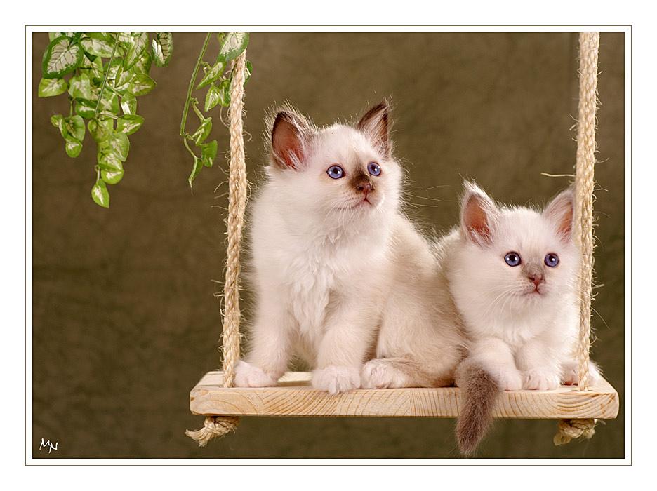 Jungle - Cats