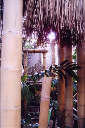 Jungle Dome