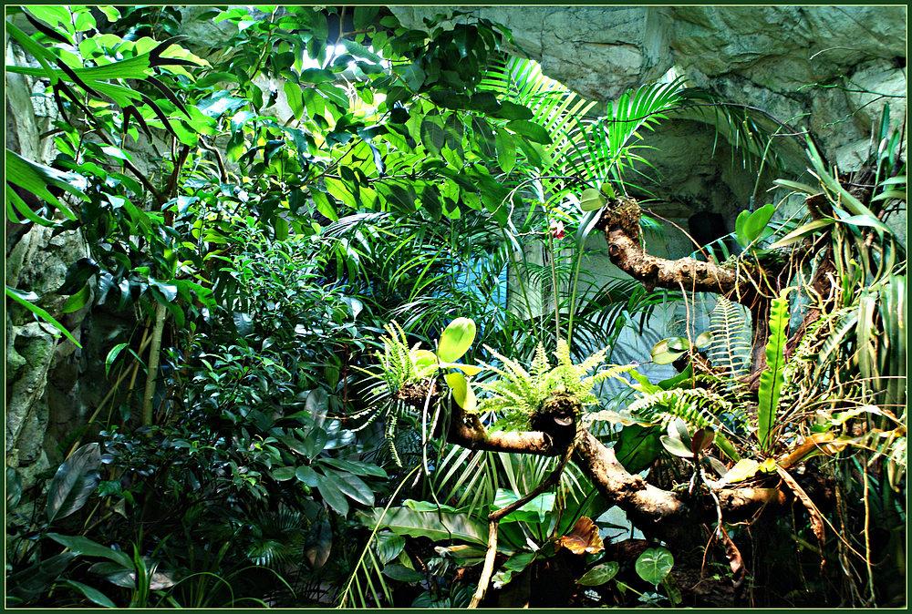 jungle fever im tropenhaus foto bild pflanzen pilze flechten februar natur bilder auf. Black Bedroom Furniture Sets. Home Design Ideas