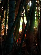 jungle ou jardin...