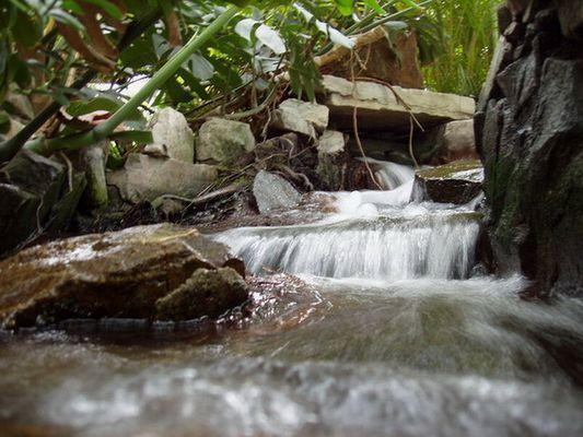 Junglewater