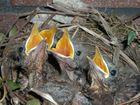 Jungvögel haben Hunger