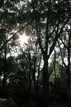 Juni-Sonne
