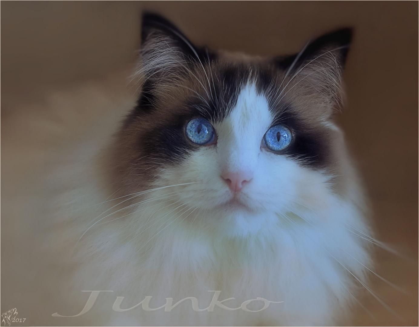 Junko blue eyes..