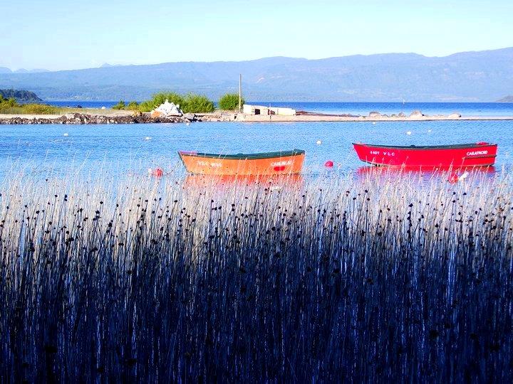 Junquillos en el lago Villarrica
