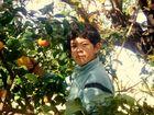 juntando naranjas