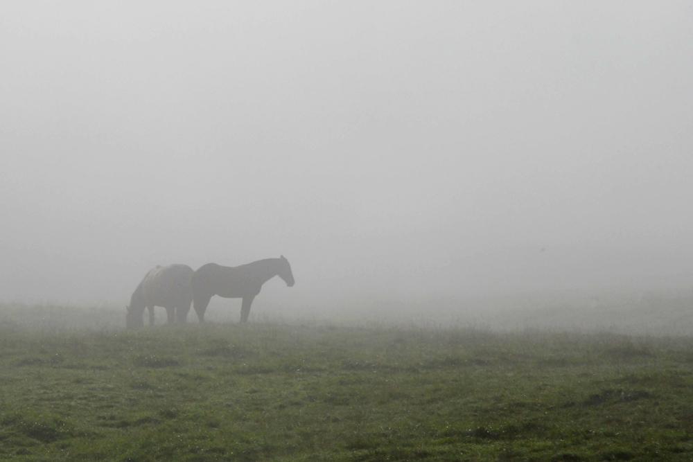 Jura,Pferde im Morgennebel