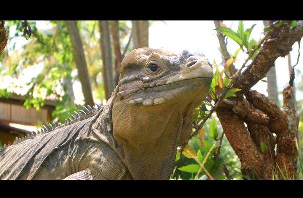 Jurassic Park reloaded, 16:9