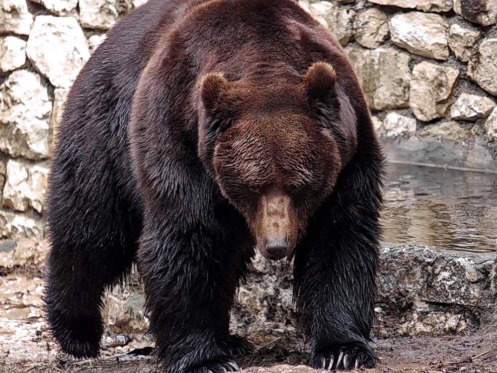 Jurka (Mutter des Problembären)