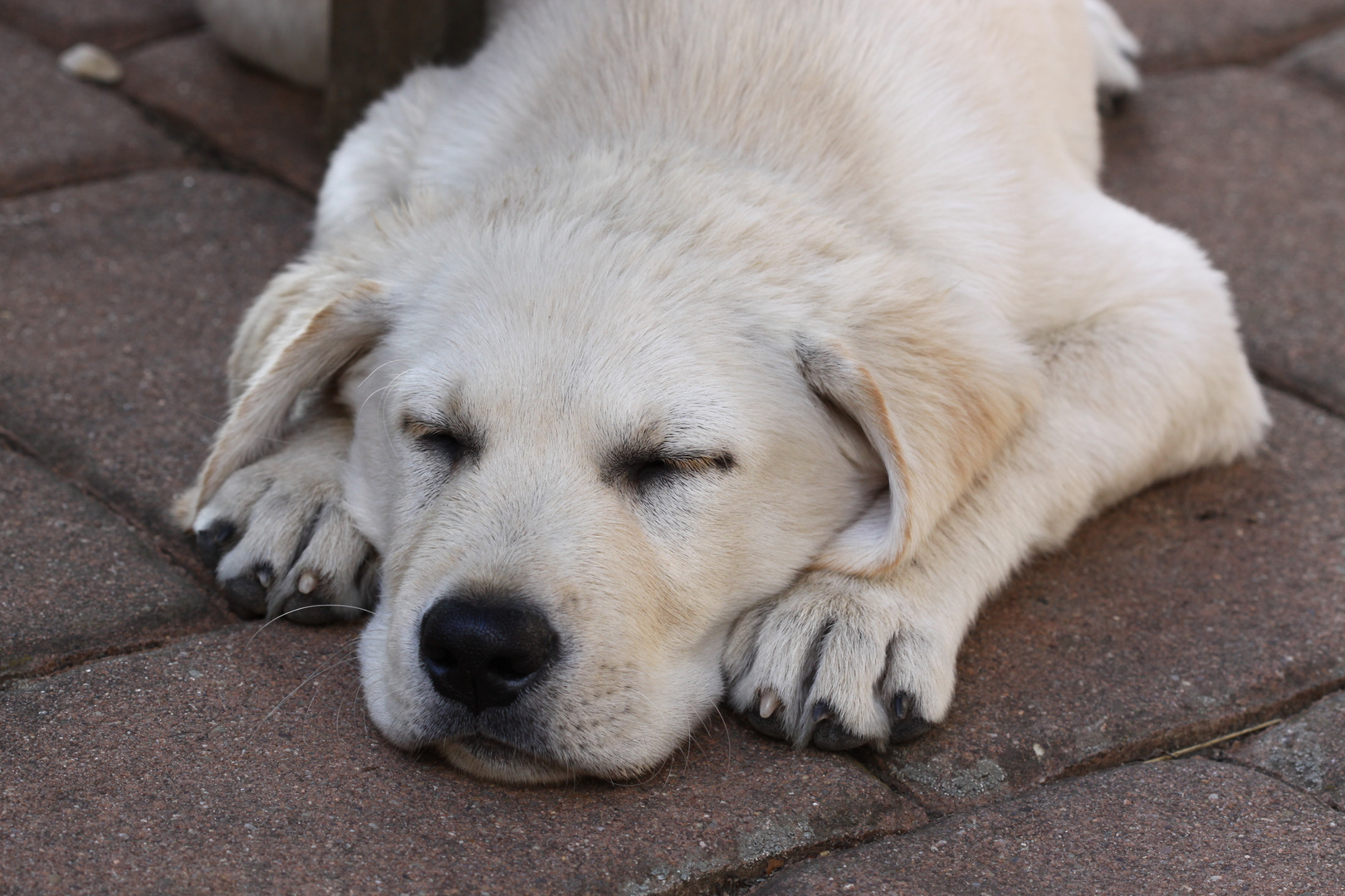 Jussi schläft