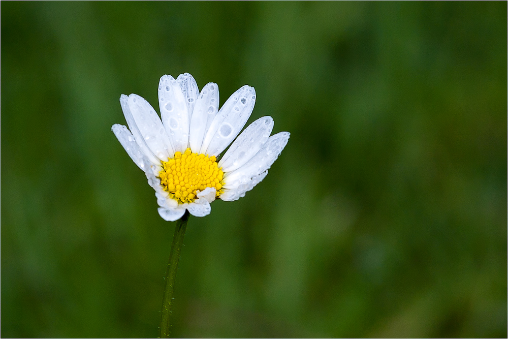 ..:: Just a Flower ::..