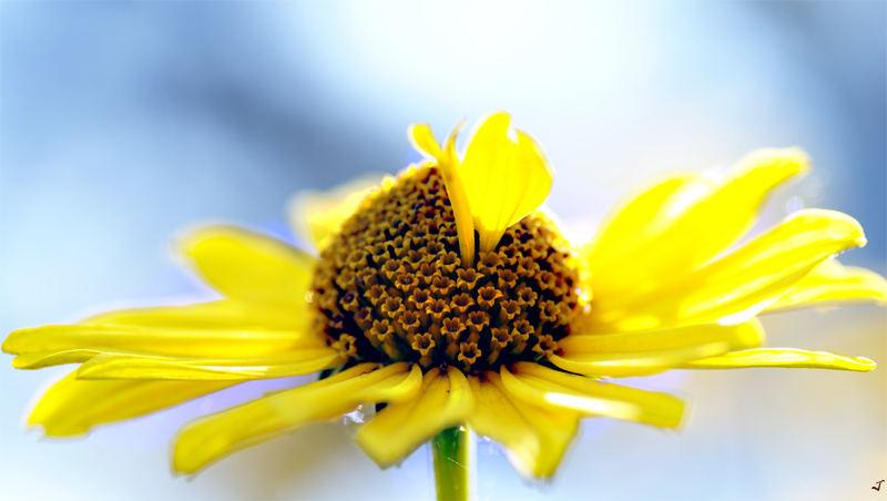 Just a Flower..