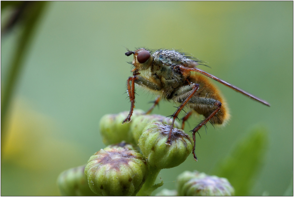 _just a fly_