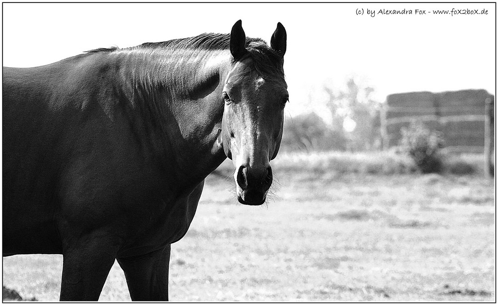 . just a horse .