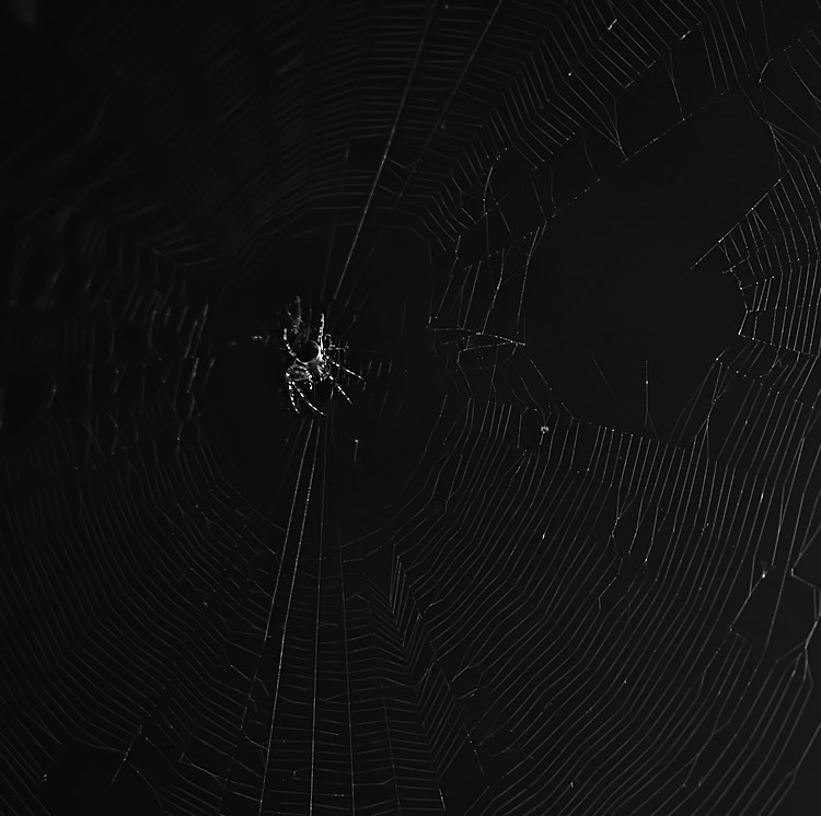- just a spider -