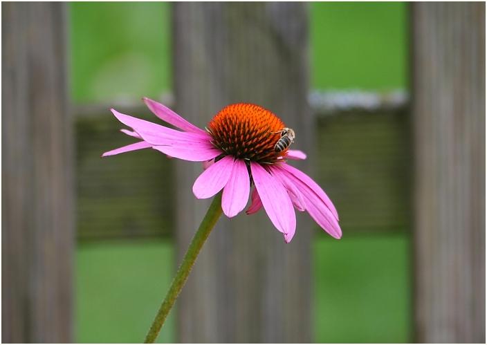 ...just a wonderful flower...