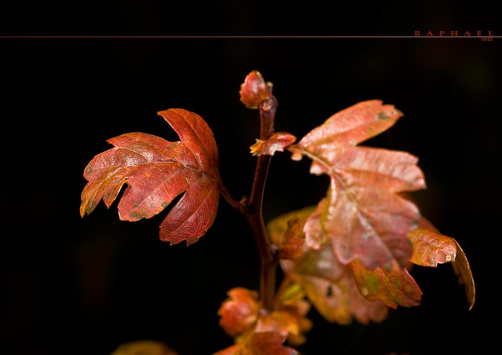 Just Autumn 1