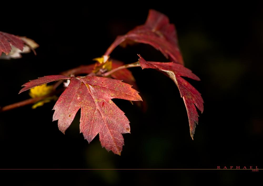 Just Autumn 2