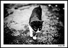 Just Cats #3