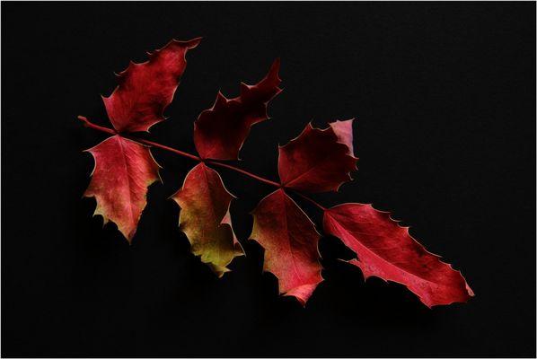 Just Leaves