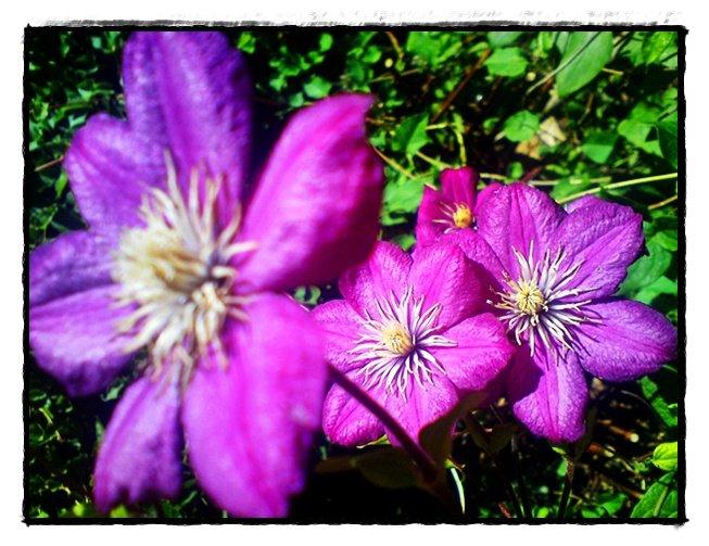 just purple