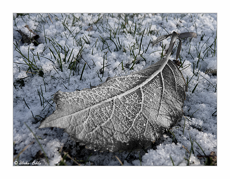 ~ Just Winter ~