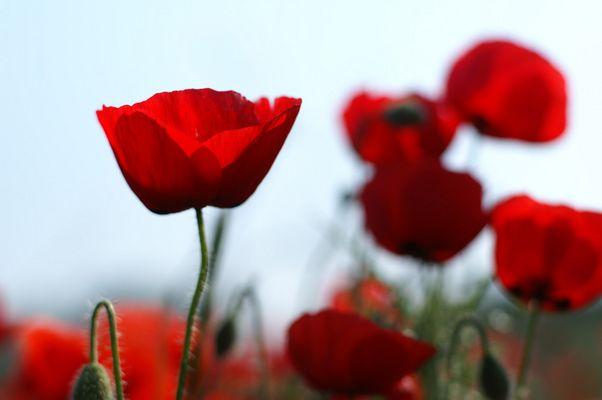 Juste pour vous quelques fleurs