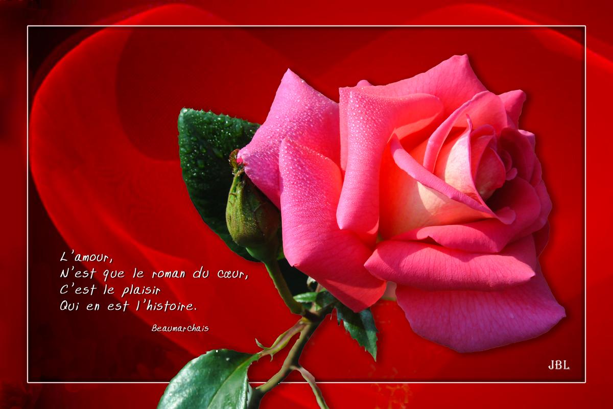 Juste une rose...