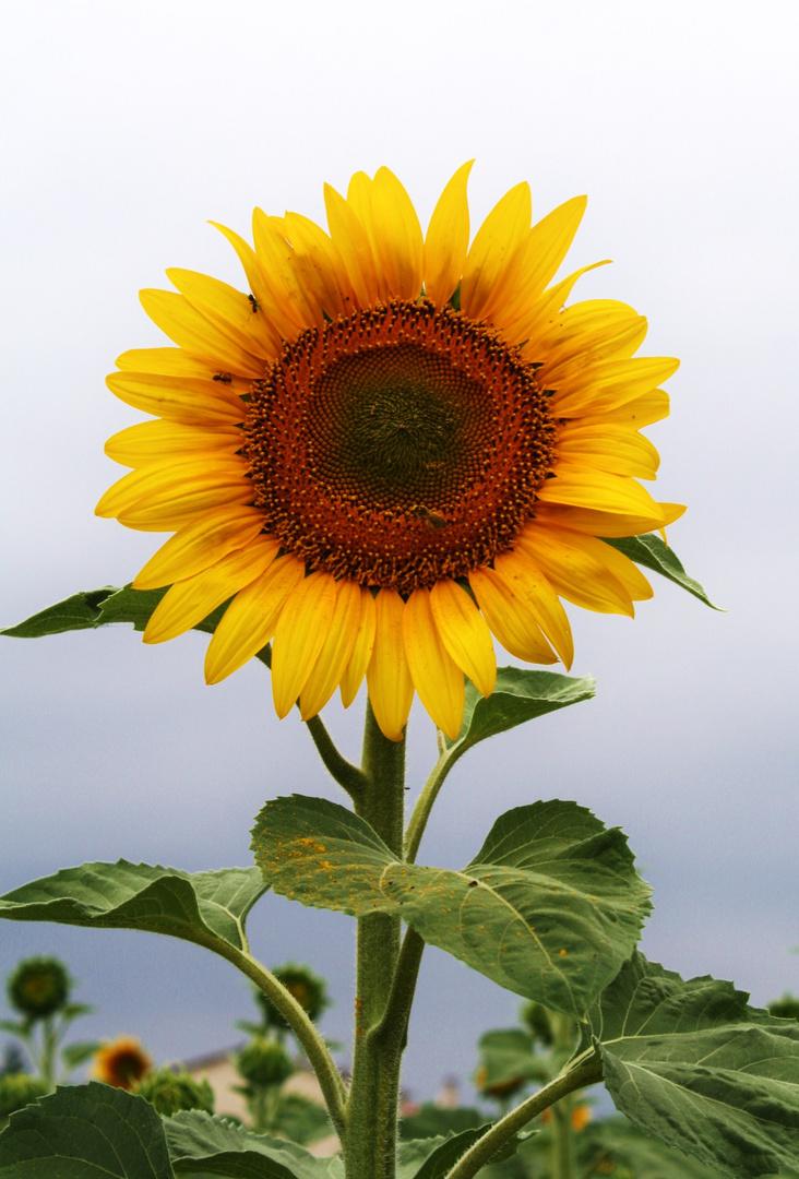 J'veux du Soleil !